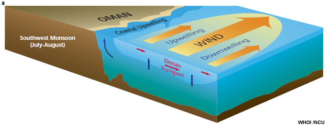 Schematic cross section of the upper ocean dynamical response to the southwesterly monsoon winds and the Arabian Peninsula (Honjo and Weller 1997).